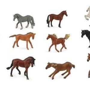 Foto van mini paarden 12 stuks